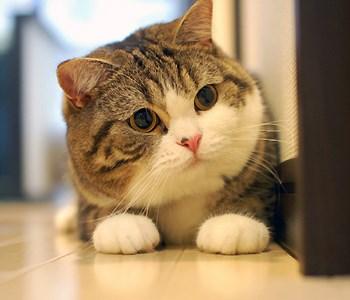 Cash Kitty: Mia