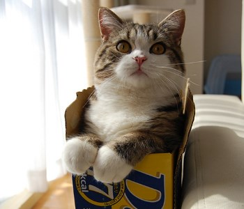 Cash Kitty: Marshmallow