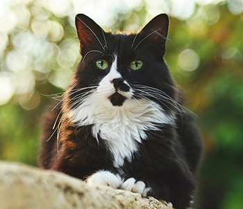 Cash Kitty: Socks
