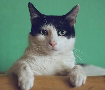 Cash Kitty: Sophie