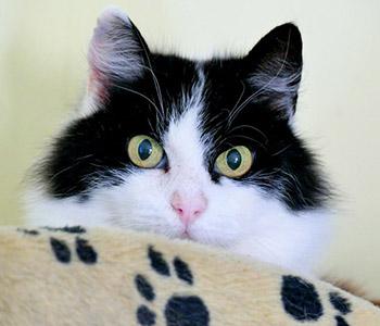 Cash Kitty: Jess